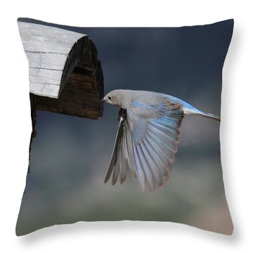 Flying Around Throw Pillow by Shane Bechler