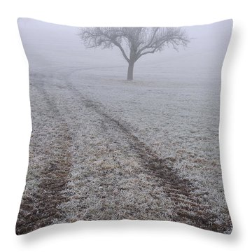 Foggy Landscape With Tree Throw Pillow by Matthias Hauser