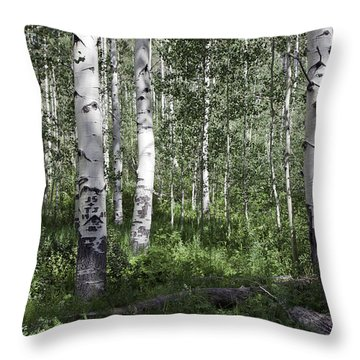 Forever Aspen Trees Throw Pillow by Madeline Ellis