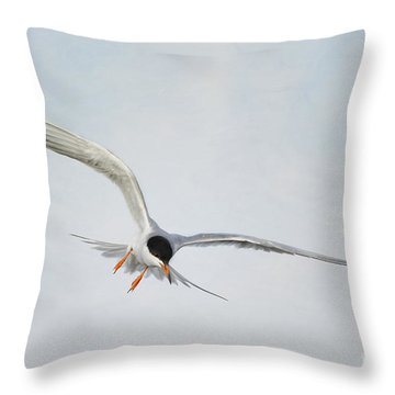 Forster's Tern Upon Cirrus Skies Throw Pillow