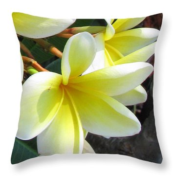 Frangipani Up Close Throw Pillow