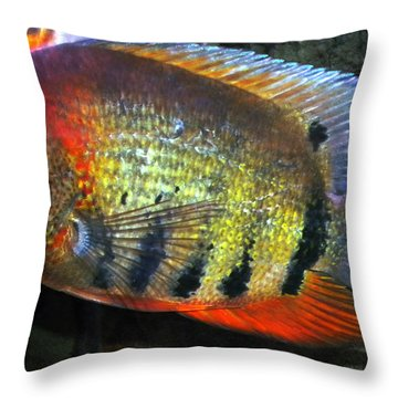 Throw Pillow featuring the photograph Friendly Fish  by Colette V Hera  Guggenheim