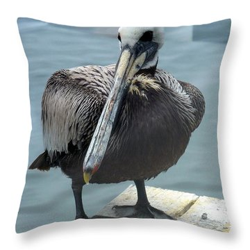 Friendly Pelican Throw Pillow by Carla Parris