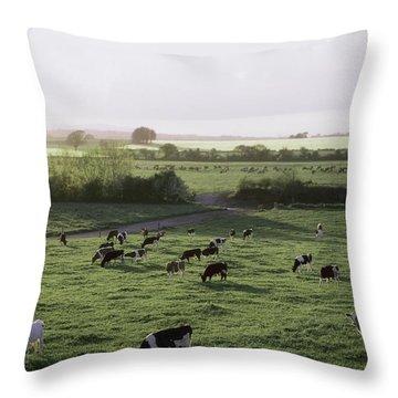 Friesian Bullocks, Ireland Herd Of Throw Pillow by The Irish Image Collection