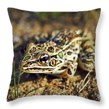 Frog Throw Pillow by Elena Elisseeva