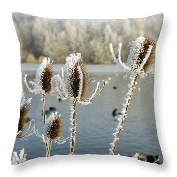 Frosty Teasel Throw Pillow by John Chatterley