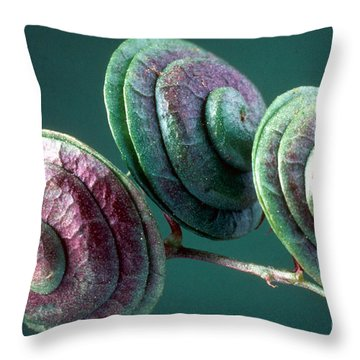 Round-fruited Medick Throw Pillows