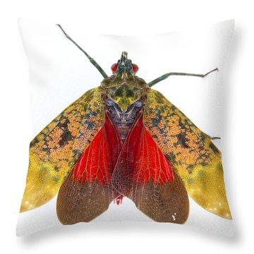 Fulgorid Planthopper Costa Rica Throw Pillow by Piotr Naskrecki