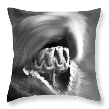 Funny Camel Throw Pillow by Heiko Koehrer-Wagner