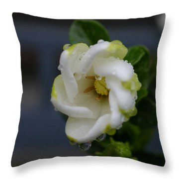 Gardenia Raindrops Throw Pillow
