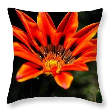 Throw Pillow featuring the photograph Gazania Krebsiana Flower by Werner Lehmann