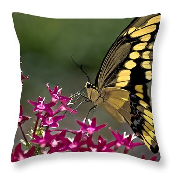 Gentle Giant Throw Pillow by DigiArt Diaries by Vicky B Fuller