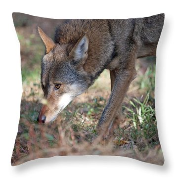 Gentle Wolf Throw Pillow by Karol Livote