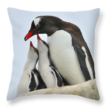 Gentoo Feeding Time Throw Pillow by Tony Beck