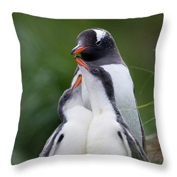 Gentoo Penguin Pygoscelis Papua Hungry Throw Pillow by Suzi Eszterhas