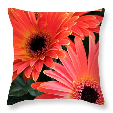 Throw Pillow featuring the photograph Gerbera Bliss by Rory Sagner