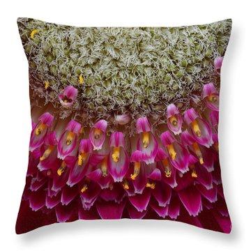 Gerbera Macro Throw Pillow by Jim and Emily Bush