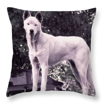 Throw Pillow featuring the photograph Ghost The Wolf by Maria Urso