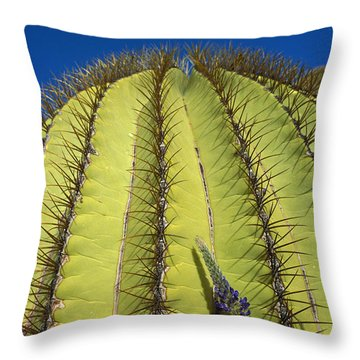 Giant Barrel Cactus Ferocactus Diguetii Throw Pillow by Tui De Roy