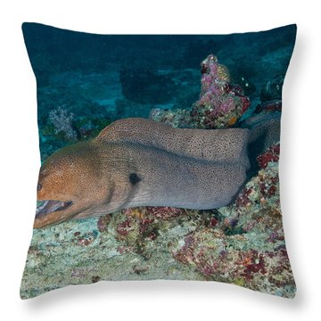 Giant Moray Eel Swimming Throw Pillow by Mathieu Meur