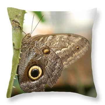 Throw Pillow featuring the photograph Giant Owl Butterfly by Lynn Bolt
