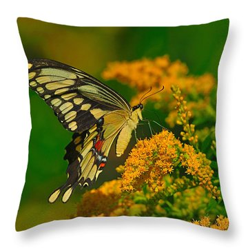 Giant Swallowtail On Goldenrod Throw Pillow by Tony Beck