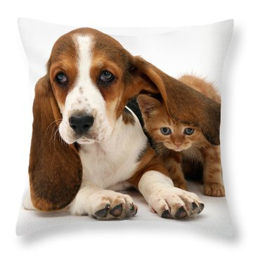 Ginger Kitten And Basset Puppy Throw Pillow by Jane Burton