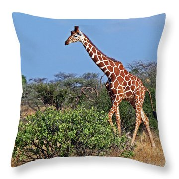 Giraffe Against Blue Sky Throw Pillow