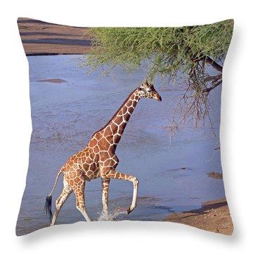 Giraffe Crossing Stream Throw Pillow