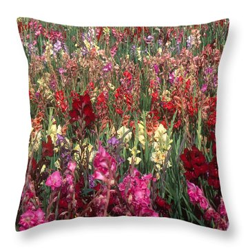 Gladioli Garden In Early Fall Throw Pillow by Yva Momatiuk and John Eastcott and Photo Researchers