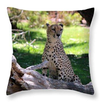 Gleska Otakuyaya Throw Pillow