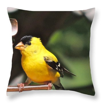 Throw Pillow featuring the photograph Gold Finch by Eve Spring