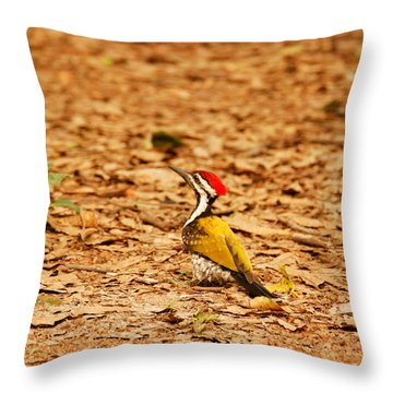Throw Pillow featuring the photograph Golden Backed Woodpecker by Fotosas Photography