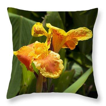 Golden Canna Throw Pillow by Kenneth Albin