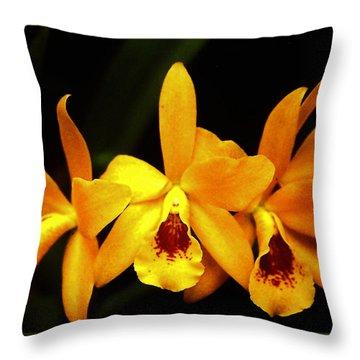 Golden Cattleya Throw Pillow by Rosalie Scanlon