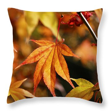 Golden Fall. Throw Pillow by Clare Bambers