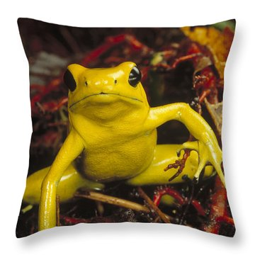 Golden Poison Dart Frog Phyllobates Throw Pillow by Mark Moffett