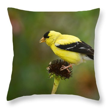 Goldfinch Throw Pillow by Alan Hutchins