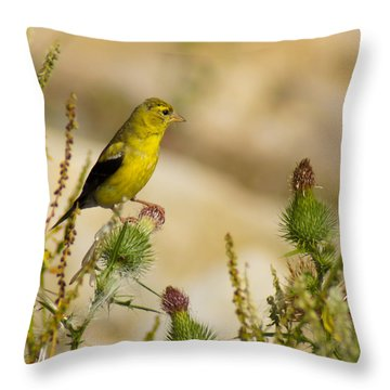 Goldfinch On Lookout Throw Pillow