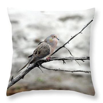 Throw Pillow featuring the photograph Good Morning Dove by Elizabeth Winter