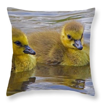 Goslings Throw Pillow