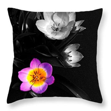 Grabbing The Spotlight Throw Pillow by Nick Kloepping