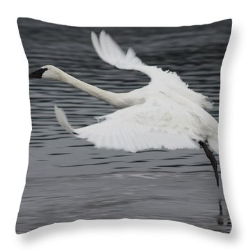 Throw Pillow featuring the photograph Graceful Landing by Cathie Douglas
