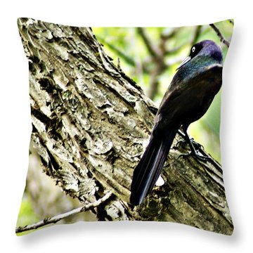 Grackle 1 Throw Pillow by Joe Faherty