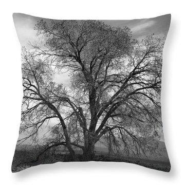 Grand Canyon Life Tree Throw Pillow