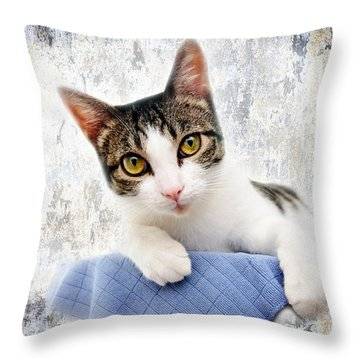 Grand Kitty Cuteness 2 Throw Pillow by Andee Design