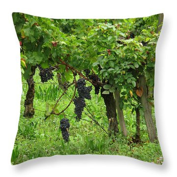 Grape Vines And Roses I Throw Pillow by Greg Matchick