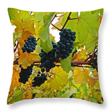 Grapes On The Vine Throw Pillow by Jani Freimann