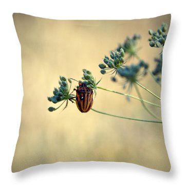 Graphosoma Lineatum Throw Pillow by Stelios Kleanthous