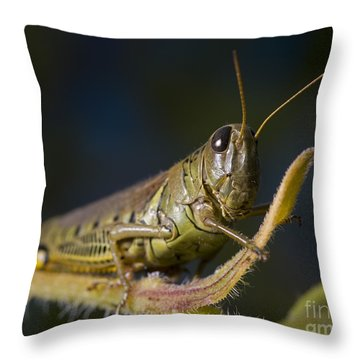 Throw Pillow featuring the photograph Grasshopper by Art Whitton